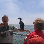 cormorant on arm