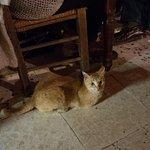 Friendly house cat