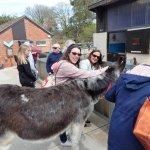 Donkeys wander amongst us!!