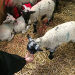 Photo de Smithills Open Farm