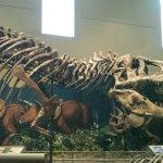 Foto de Carnegie Museum of Natural History