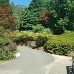 National Rhododendron Gardens Foto