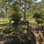 Vera, la rinoceronte