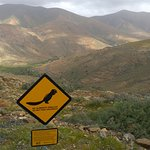 Mirador de las Panas and squirrel sign