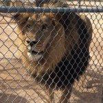 Foto de Lion Habitat Ranch
