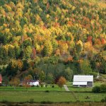 autumn colours Margaree Valley