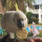 Photo of BEST WESTERN Mango House Resort