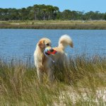My dog loved playing fetch within Apalachicola Bay