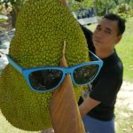 jackfruit wearing glasses ..wowww smart