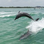 Photo of Little Toot Dolphin Adventures