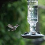 Hummingbirds visit often, and will let you know if their feeder is missing!