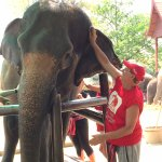 Tending 'Jumpee', the elephant I was assigned at the beginning of my stay.