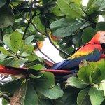 Pretty bird-y!