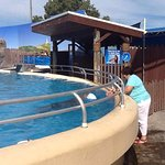 Photo of Pet Porpoise Pool - Dolphin Marine Magic
