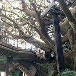 Like dining in a grown-up version of a kid's fantasy tree house.