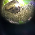 Flash the Sloth as seen through our guide's scope