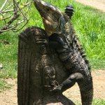 Iguana perched on a statue