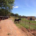 Tenuta del Fontino Family-Farm Hotel Foto