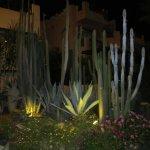 Foto de Rehana Sharm Resort