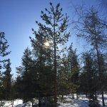 Foto de Lapland Hotel Saaga