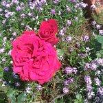 wonderful roses everywhere.