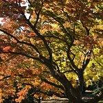 Photo de Royal Tasmanian Botanical Gardens