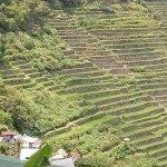 Trek in rice terraces