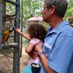Feeding a Blue and Gold Macaw