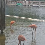 """We watched the flamingos doing their little """"dance"""" to rustle up the bugs"""