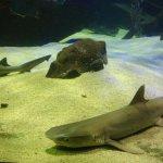 Foto di Underwater World Langkawi