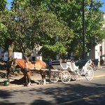 Carriage Horse and Buggy Ride Near The Hotel