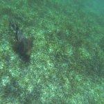 Photo of Shark Ray Alley