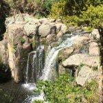 Photo de The Lodge at Kauri Cliffs