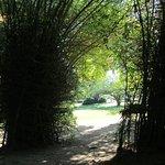 Part of the botanical garden