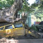 Tree fell on a bus during a storm years ago