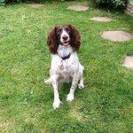Maisie at the pub