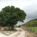 Photo of Agriturismo Ristorante Lo Ziro