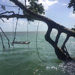 A snapshot of a random swing on a random island. Kids had loads of fun swimming out to this!
