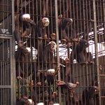Foto di Ngamba Island Chimpanzee Sanctuary