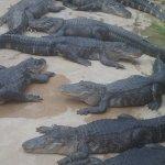 Photo of Alligator Bay