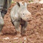 baby Rhino such a cutie....