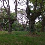 Carbayeda (robledal) del Parque botanico de Gijón