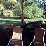 PakoBa Rapa Nui Photo