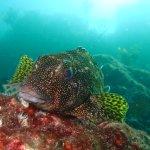 Photo de Northland Dive