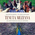 Alcuni degli animali di Tenuta Mezzana. Foto vere, non fotomontaggi