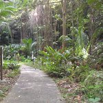 Pathways through the rainforest grounds