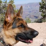 Tip: GC is pet friendly; pet must stay on designated rim trail; great kennel available