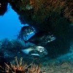 Kingfish in mauritius