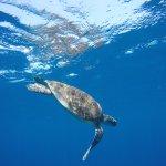 turtle snorkerling