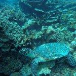 turtle snorkerling trip package 3
